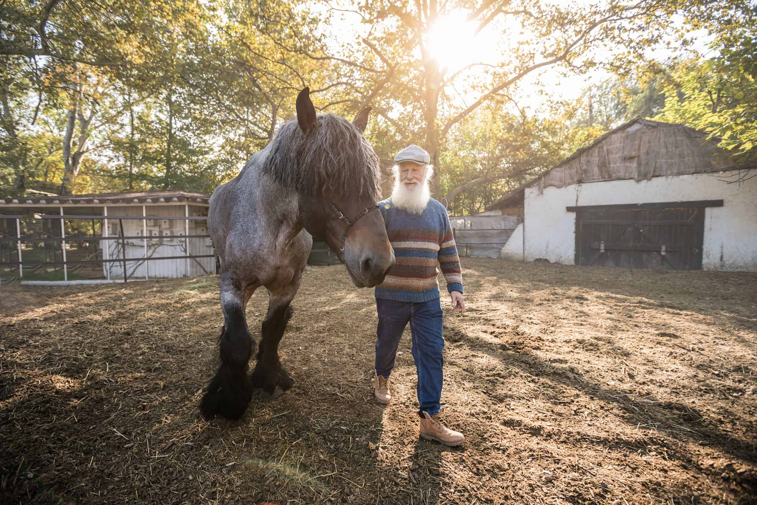 horses mental health benefits, man with horse
