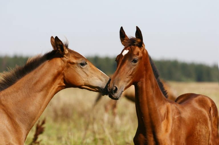 two purebred foals