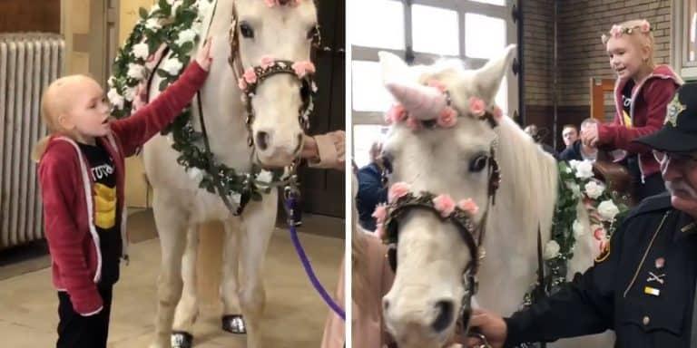 real-life unicorn