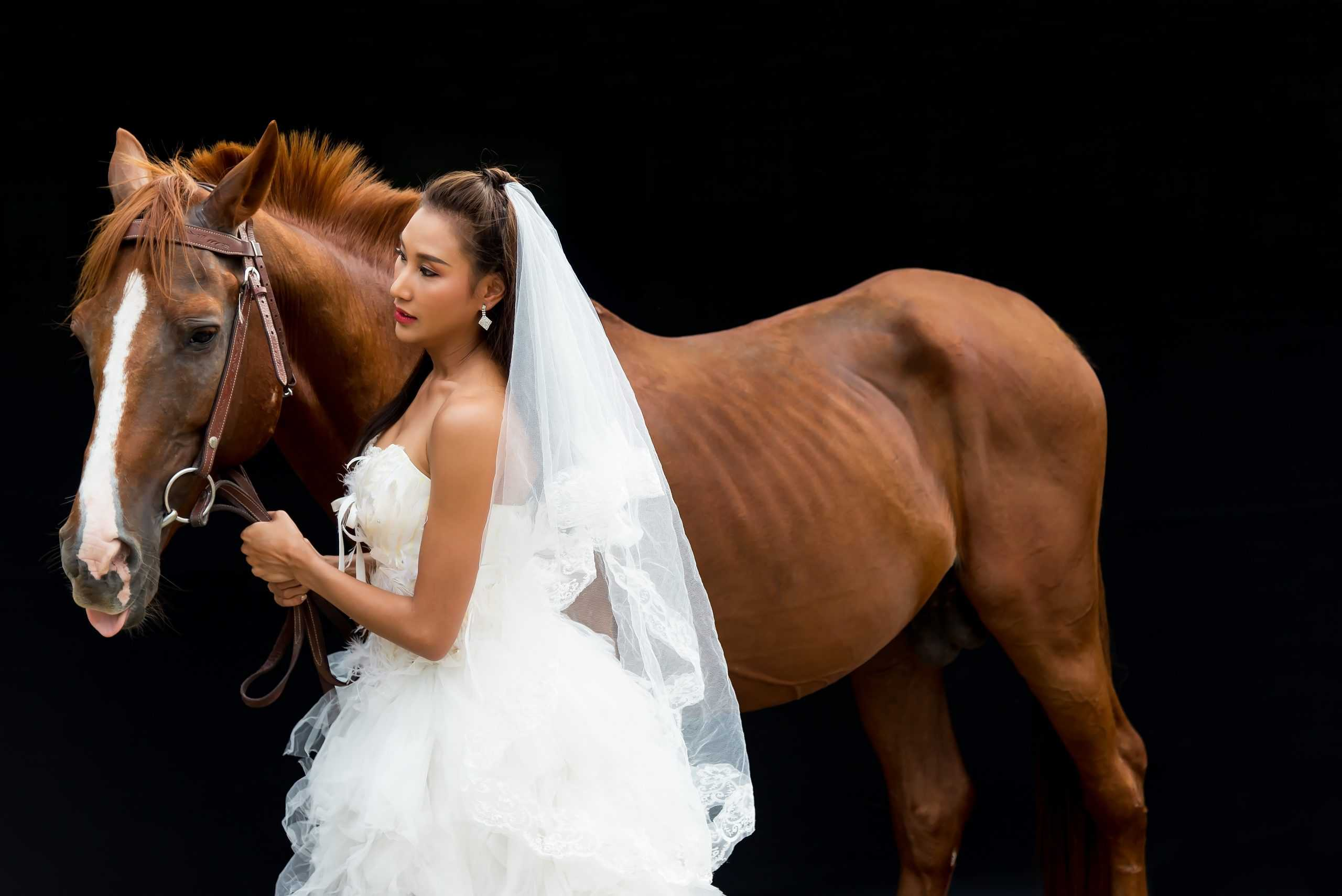 Beautiful bride with black horse wedding