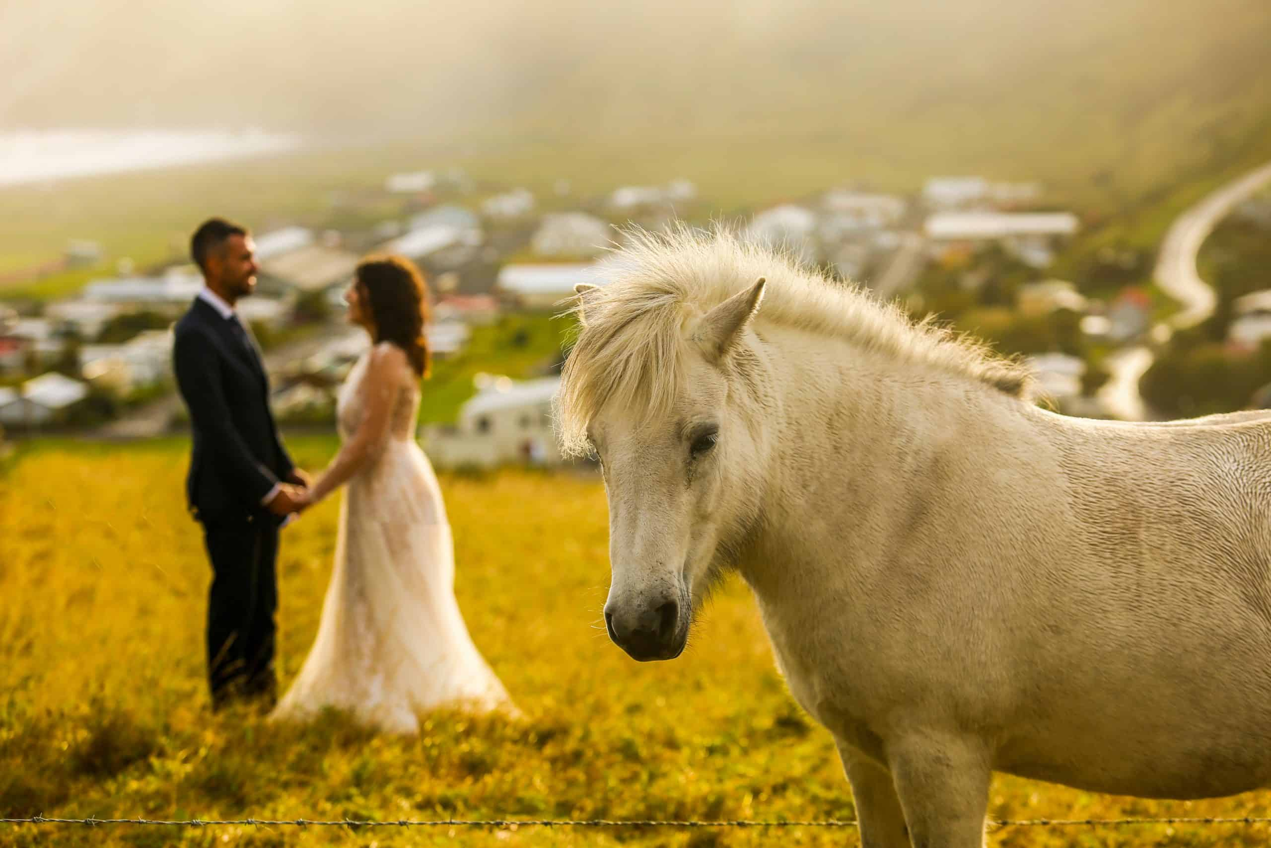 Beautiful wedding couple posing on field with horse