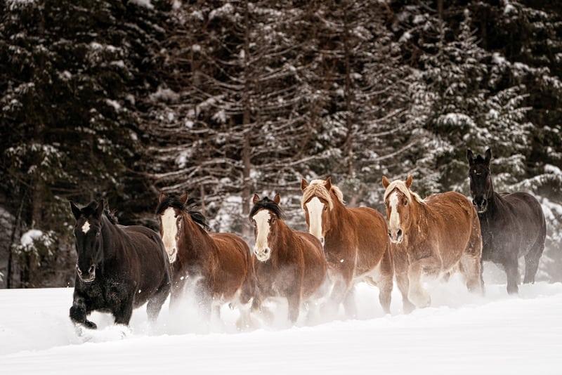 world's biggest horses