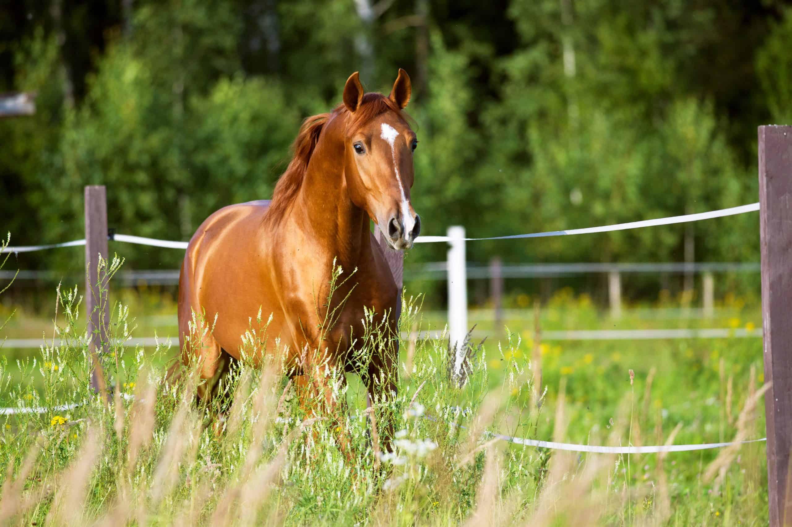 horses recognize
