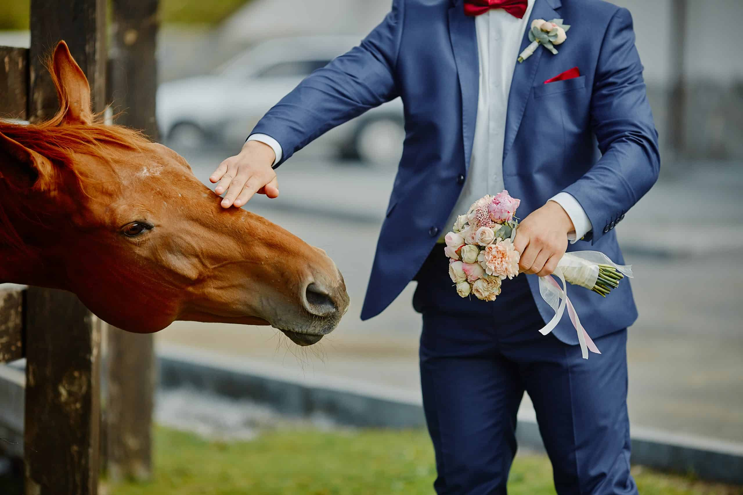 The groom, holding a wedding bouquet in hand, and a horse, who reached out to the bouquets to smell and eat.Funny wedding moment.