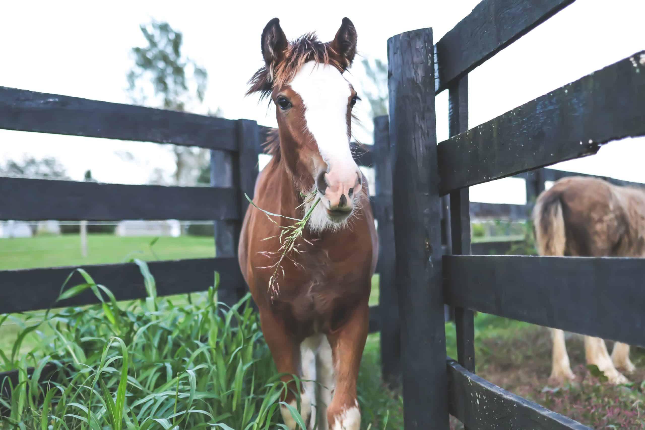 horses cushing's disease