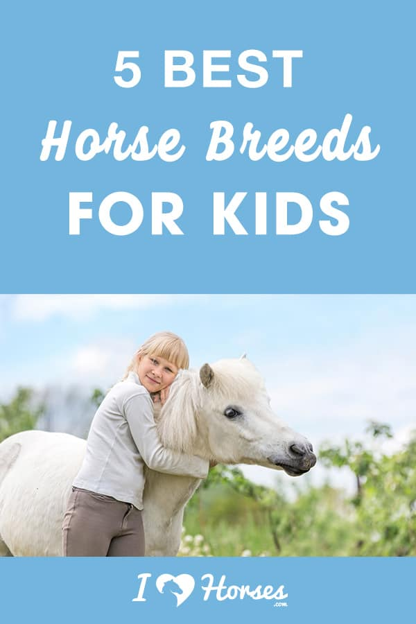 5 best horse breeds for kids