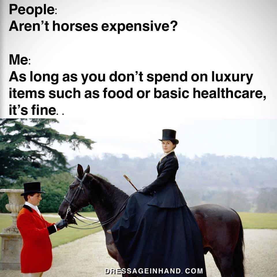 equestrian memes