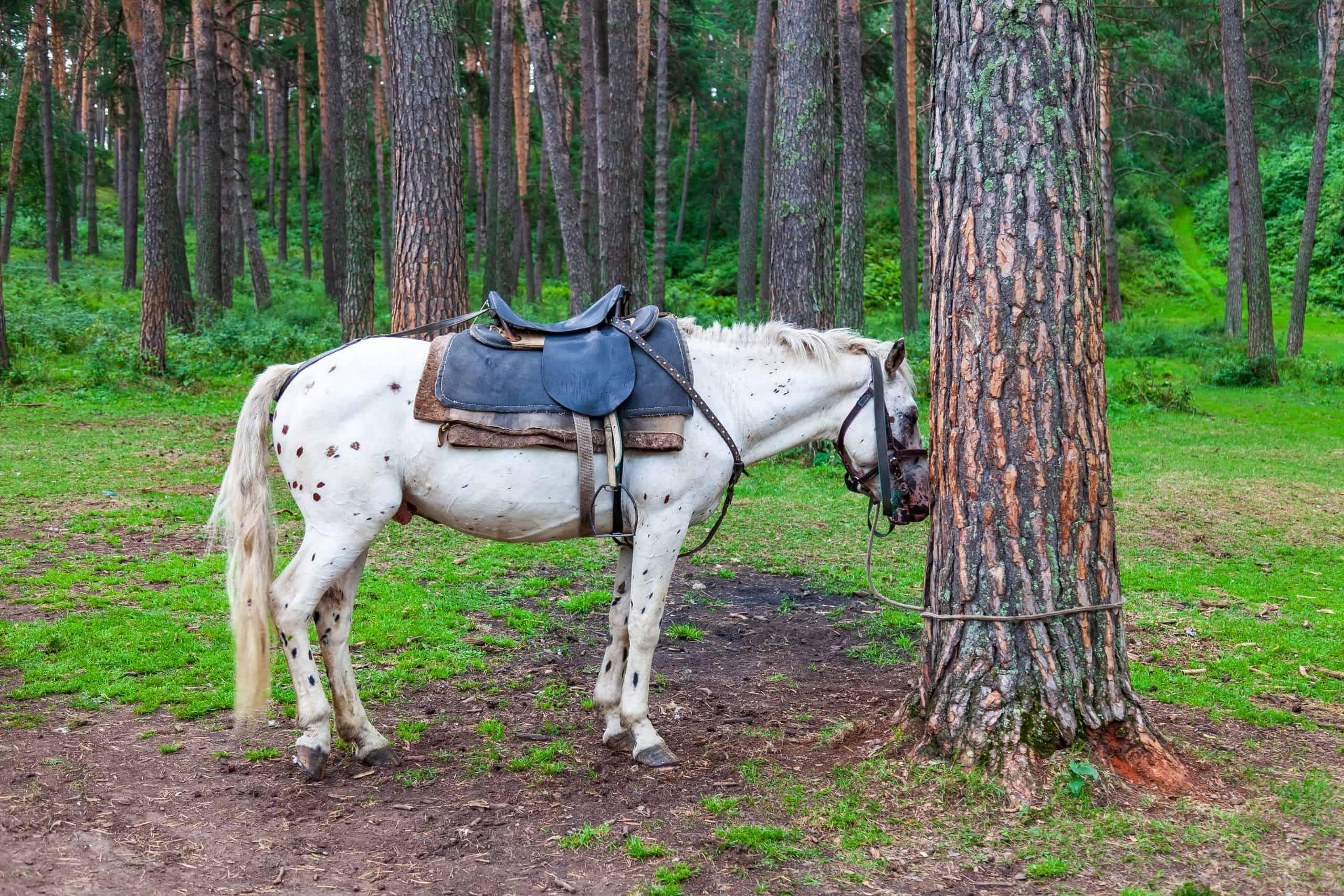 horse sleep