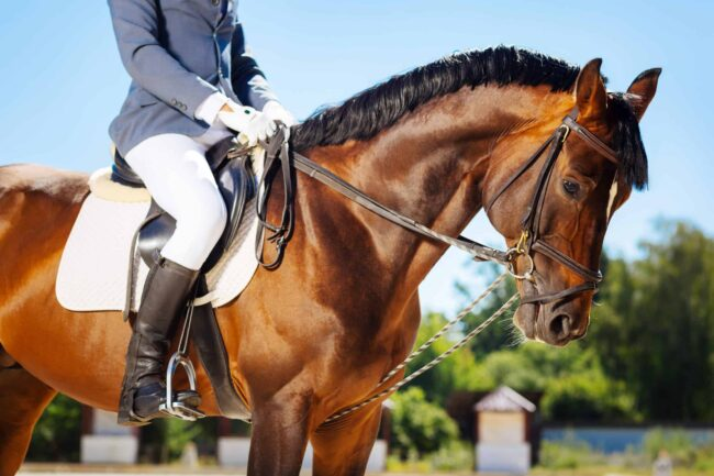 cost of owning a horse 2