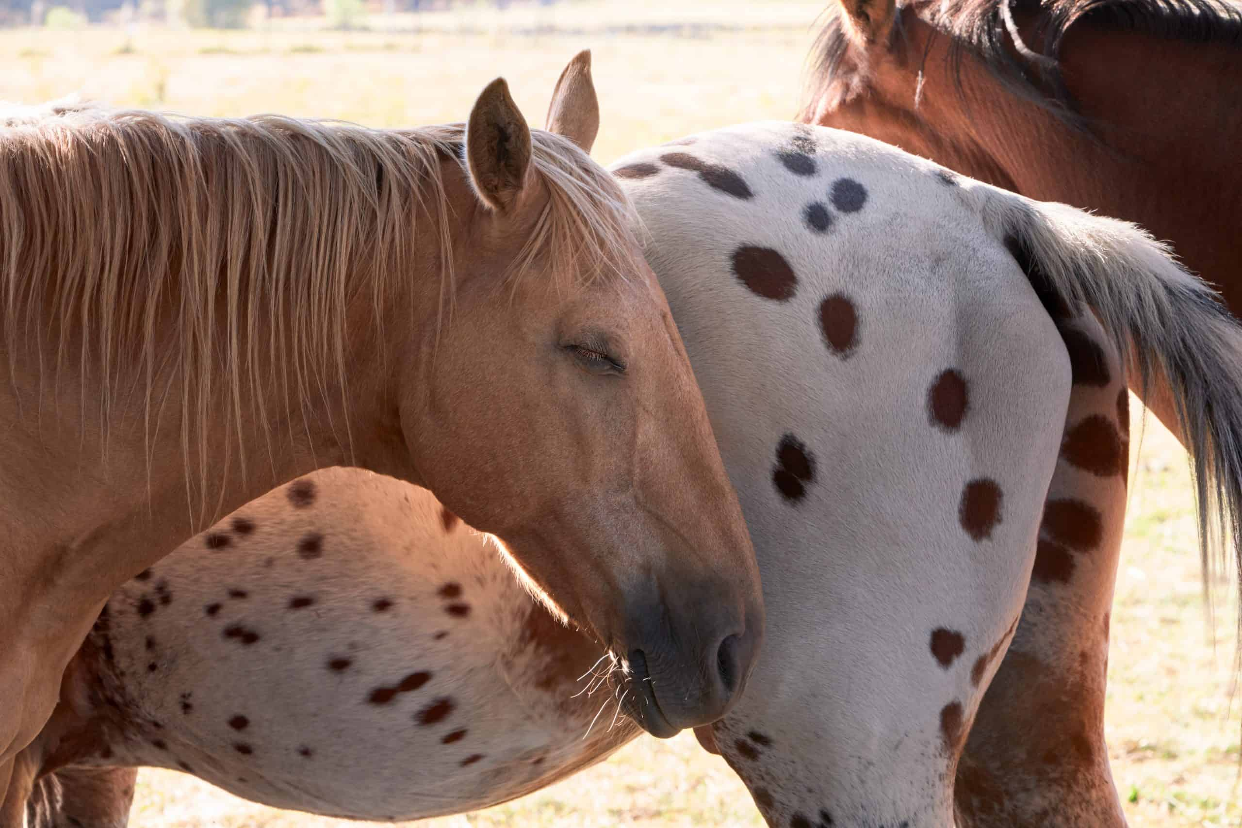 horse's sleeping habits