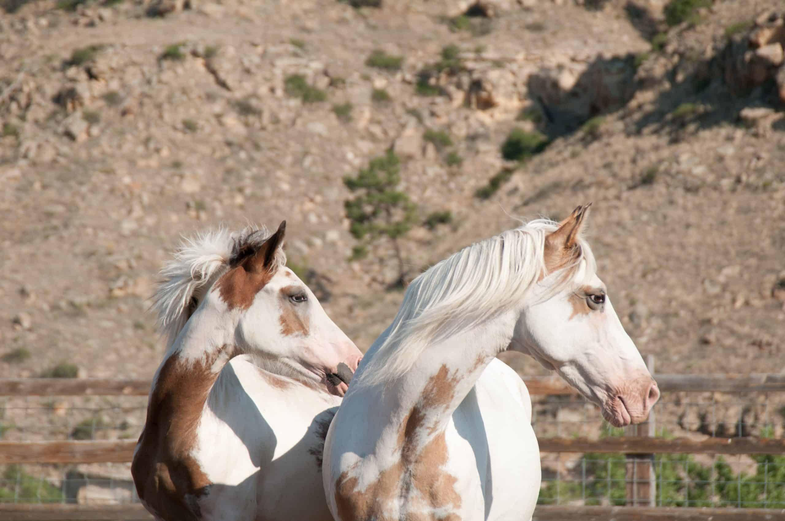 save wild horses