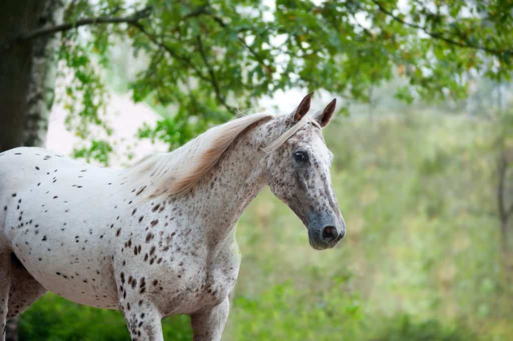 most beautiful horse breeds