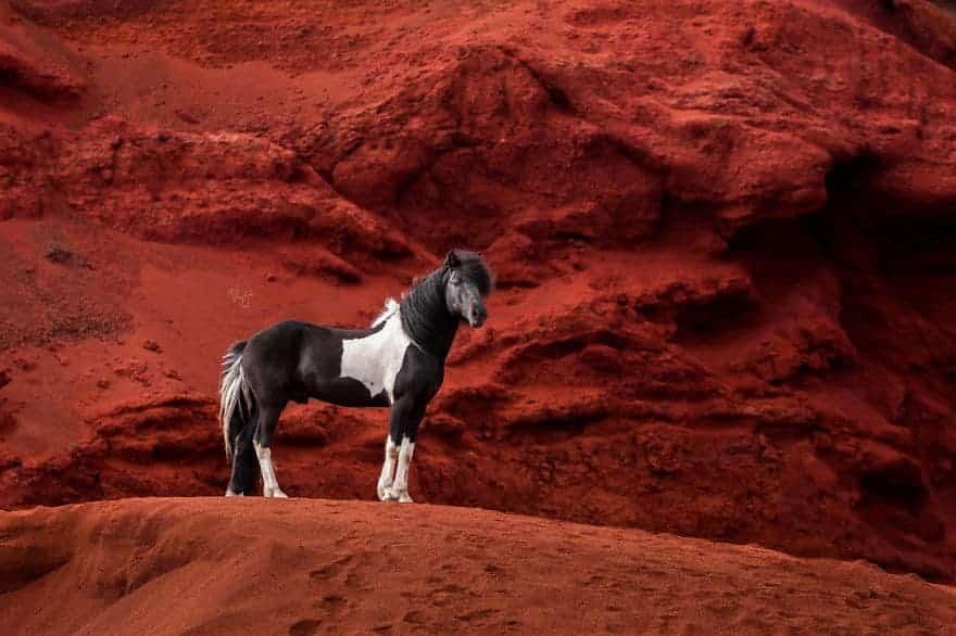 images of horses - liga liepina