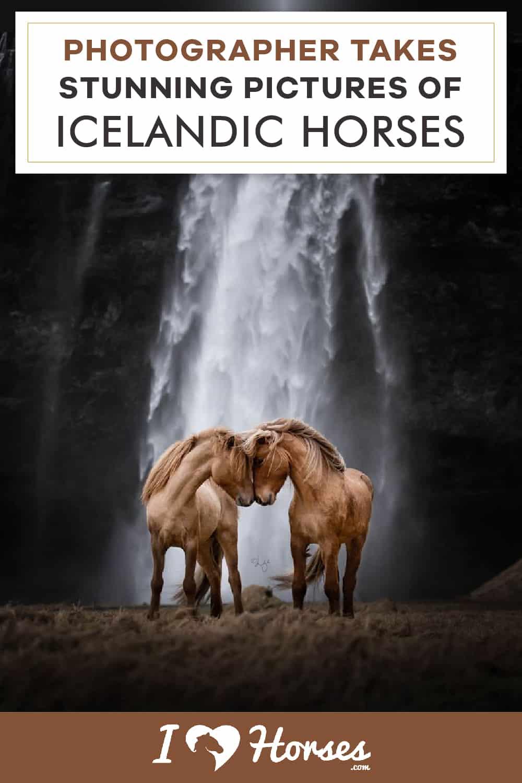 Incredible Icelandic Horse Photography-04-02
