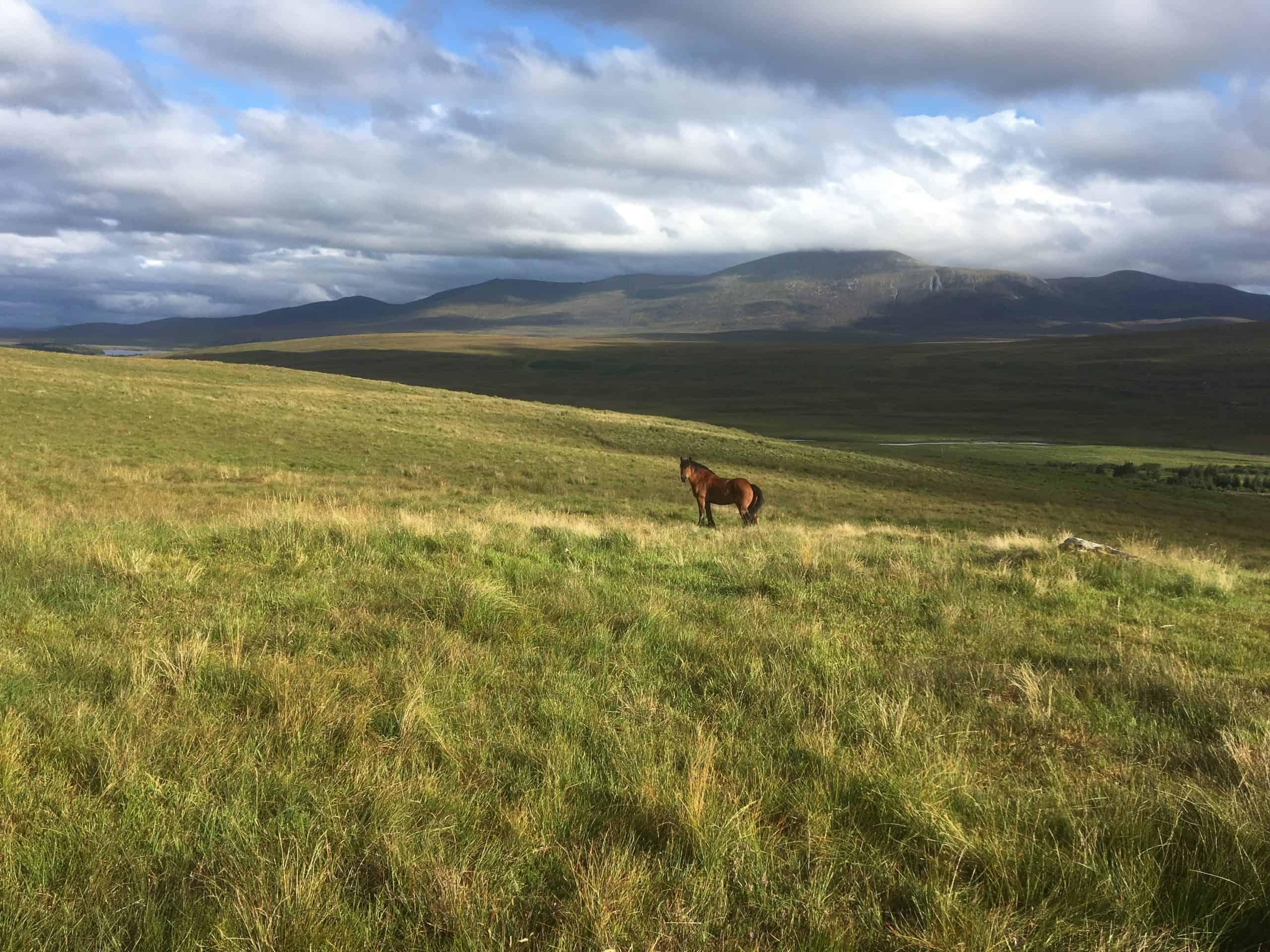 Taliesin_Mudale_Scotland