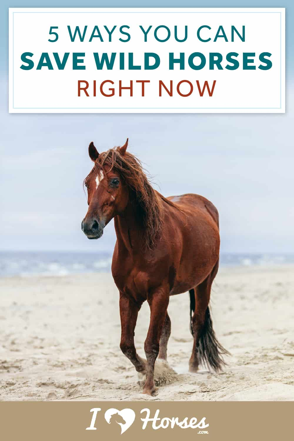 how you can save wild horses