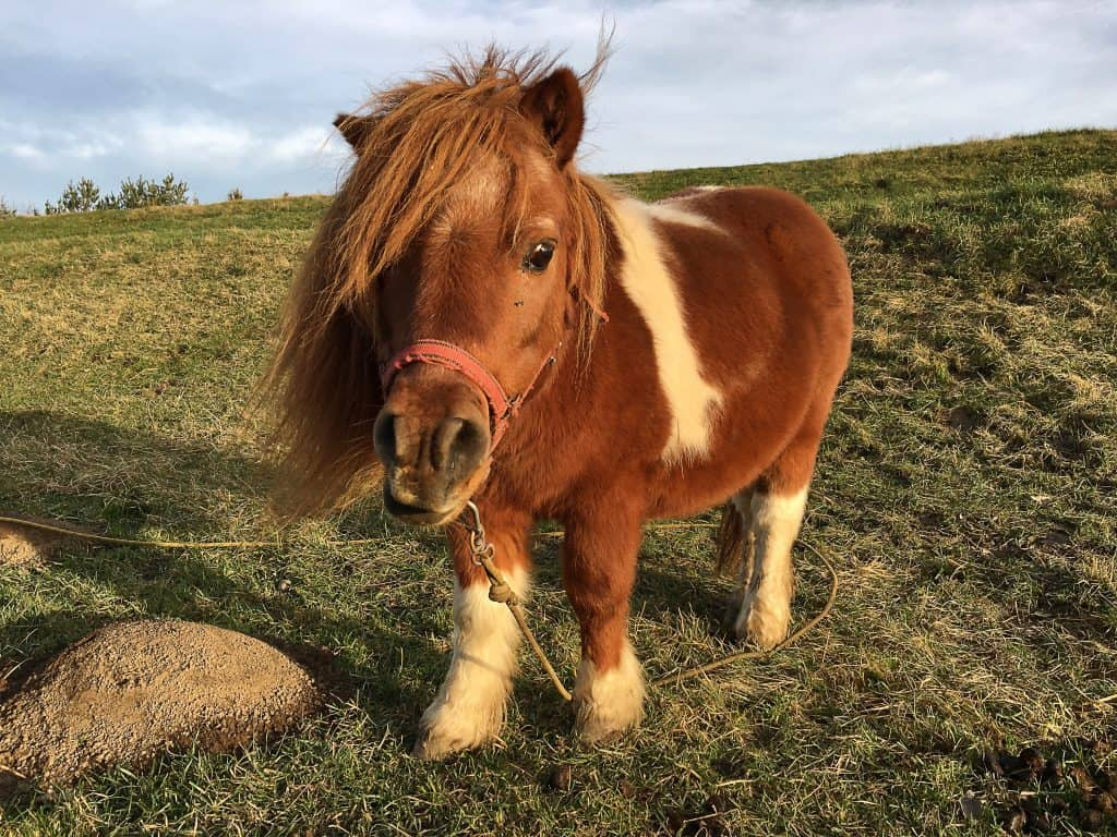pictures of ponies