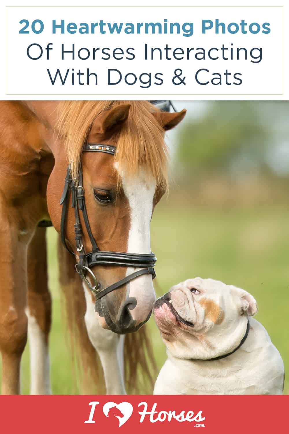 20 Adorable Photos Of Horses With Dogs & Cats-02