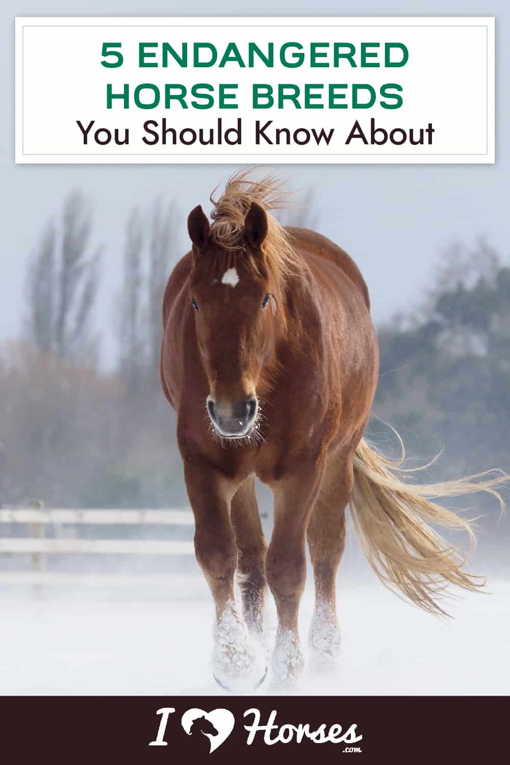 5 Endangered Horse Breeds You Should Know About