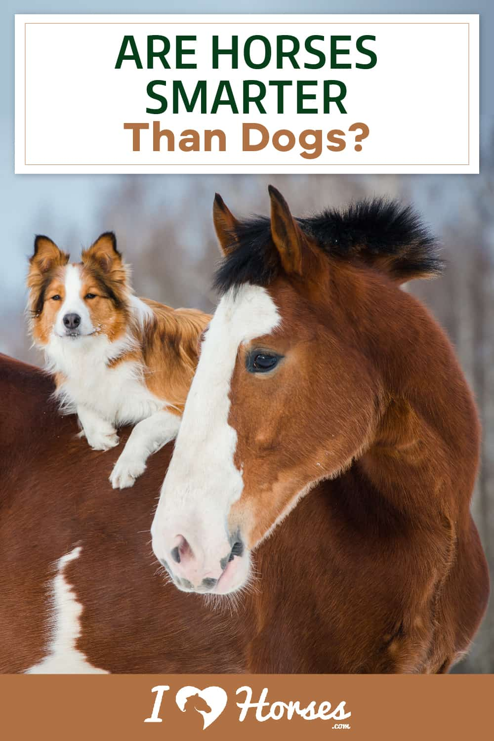 Are Horses Smarter Than Dogs-01-02, horse and dog, horse and dog friends