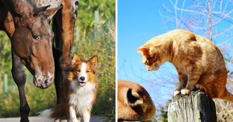 dogs cats and horses