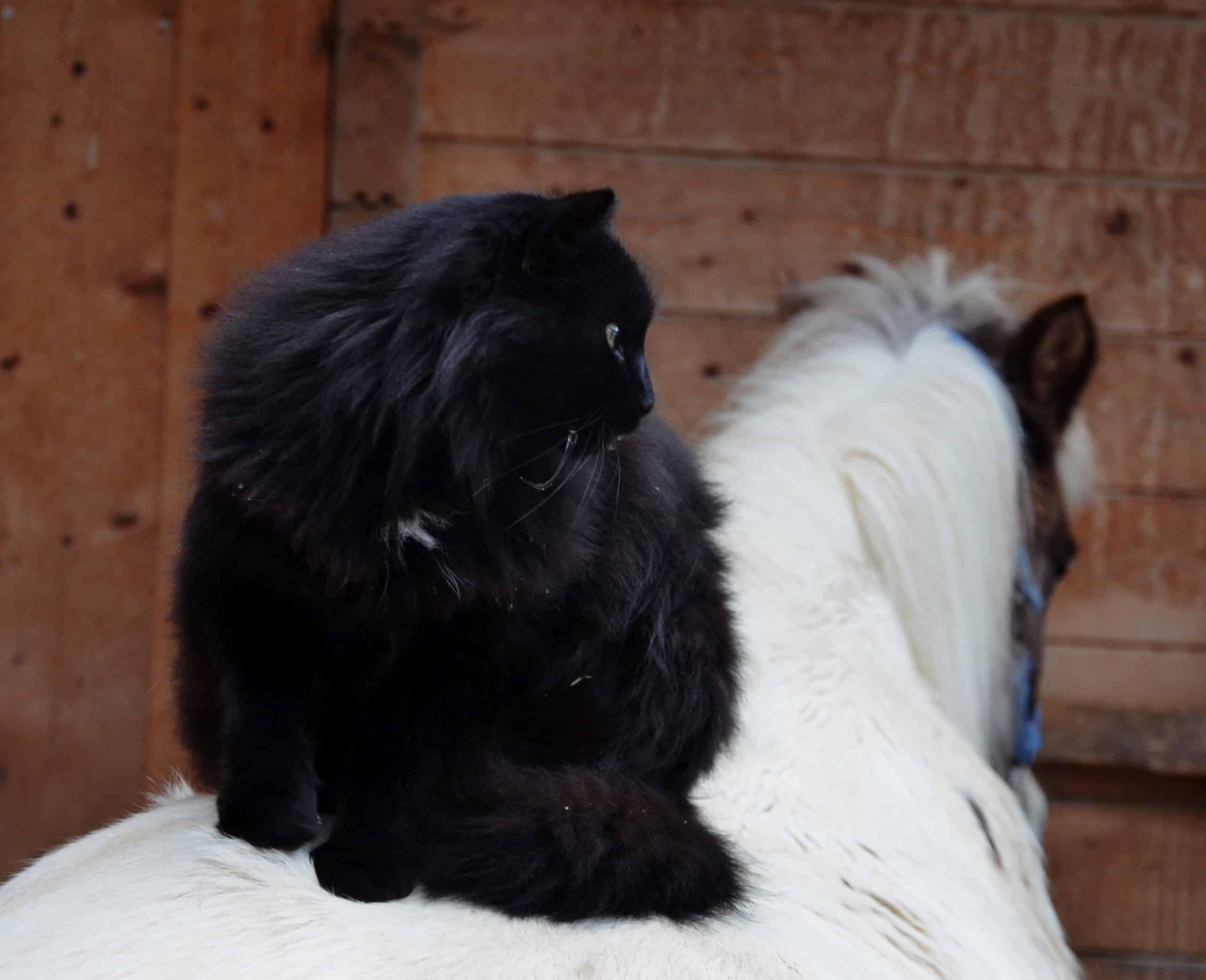 Diese Katze sitzt bequem!