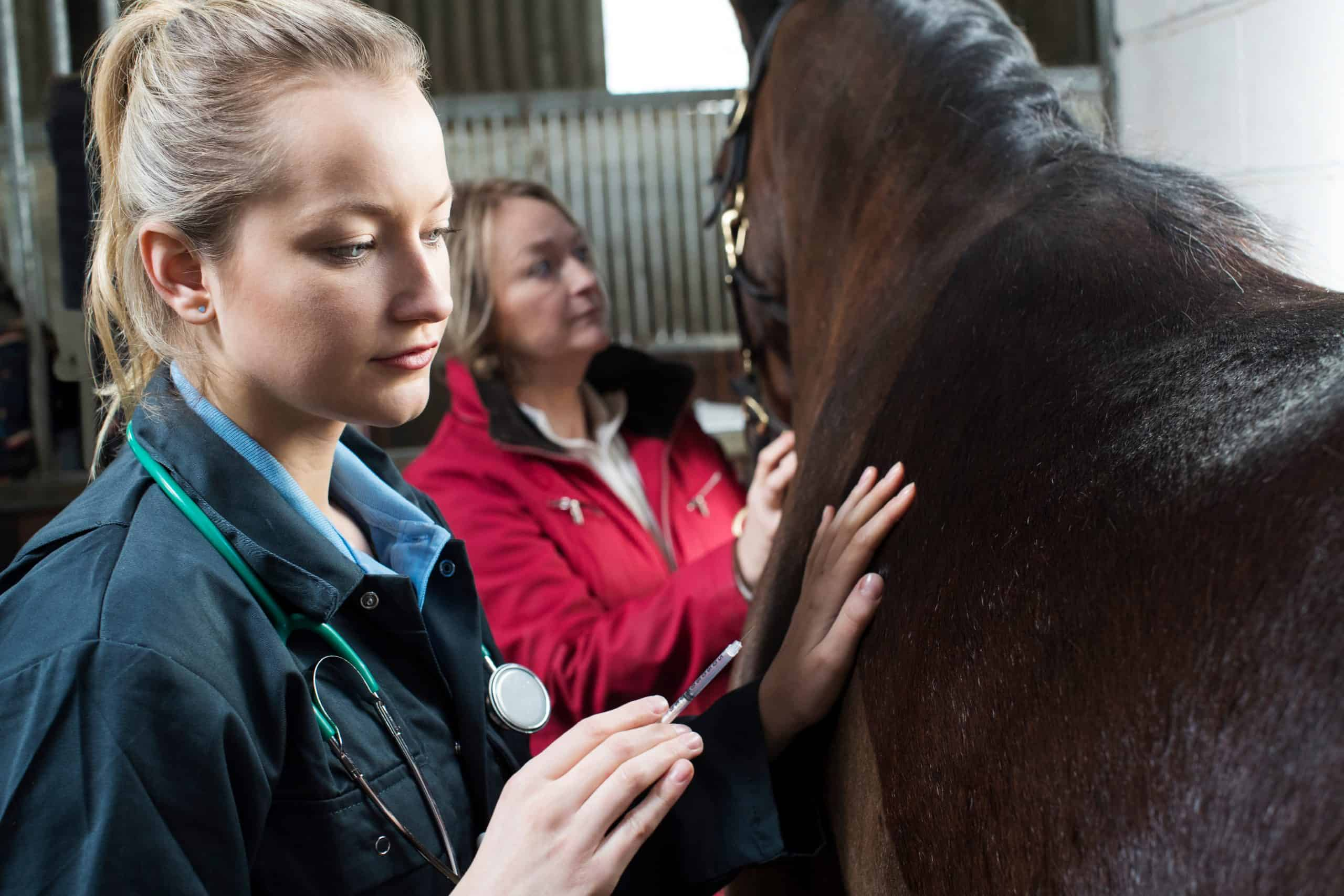 Female Vet Giving Injection To equine In Stable