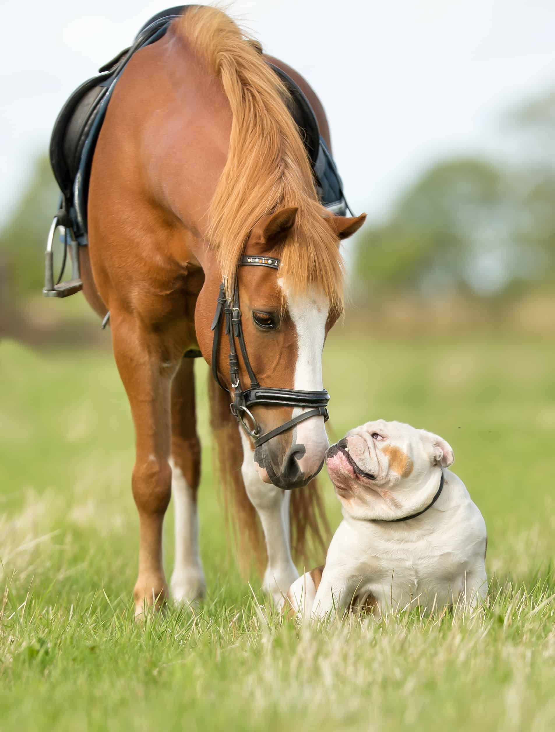 Dog and horse having a great time outdoors on grass during summer time.