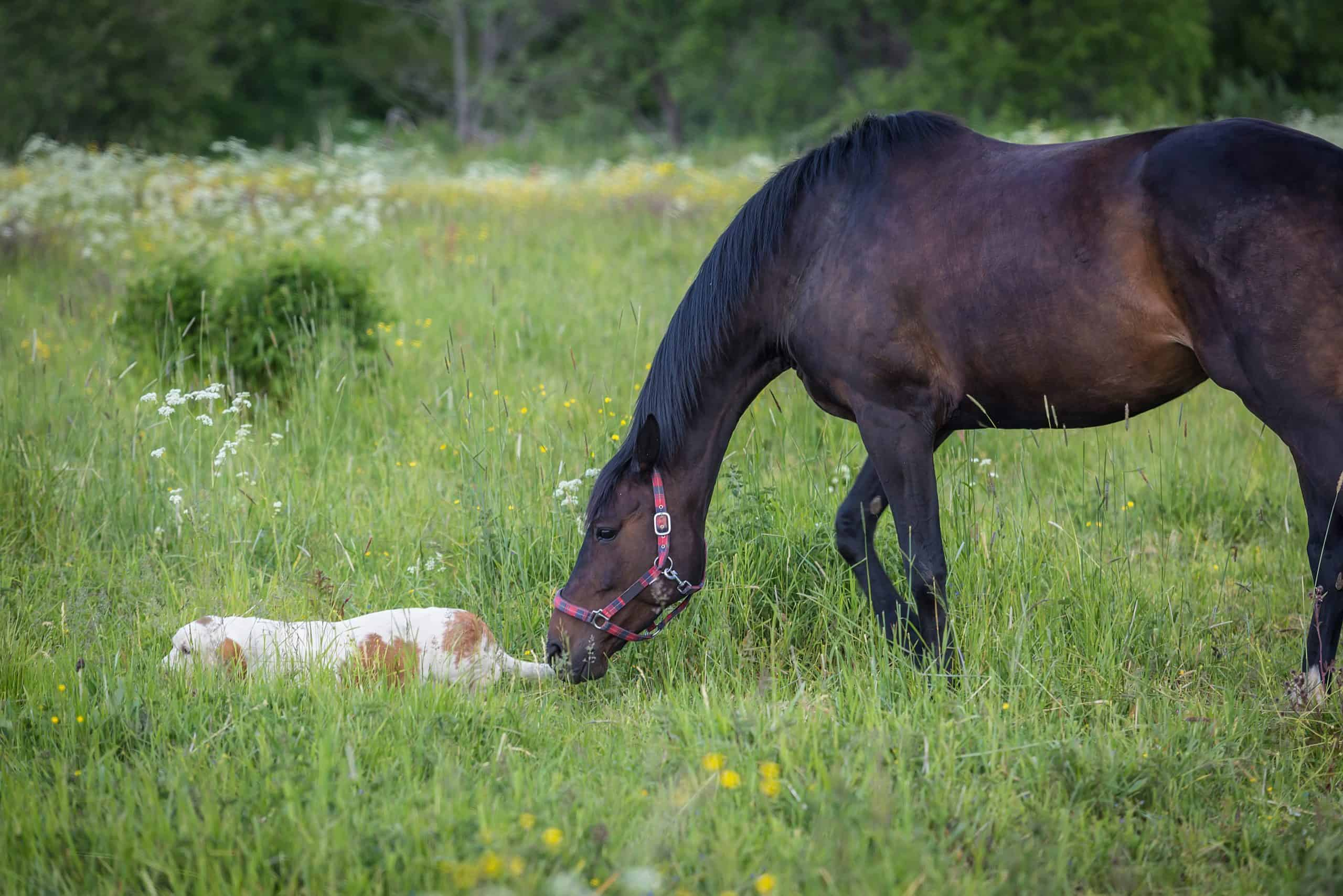 A horse and a bassethound dog outdoors