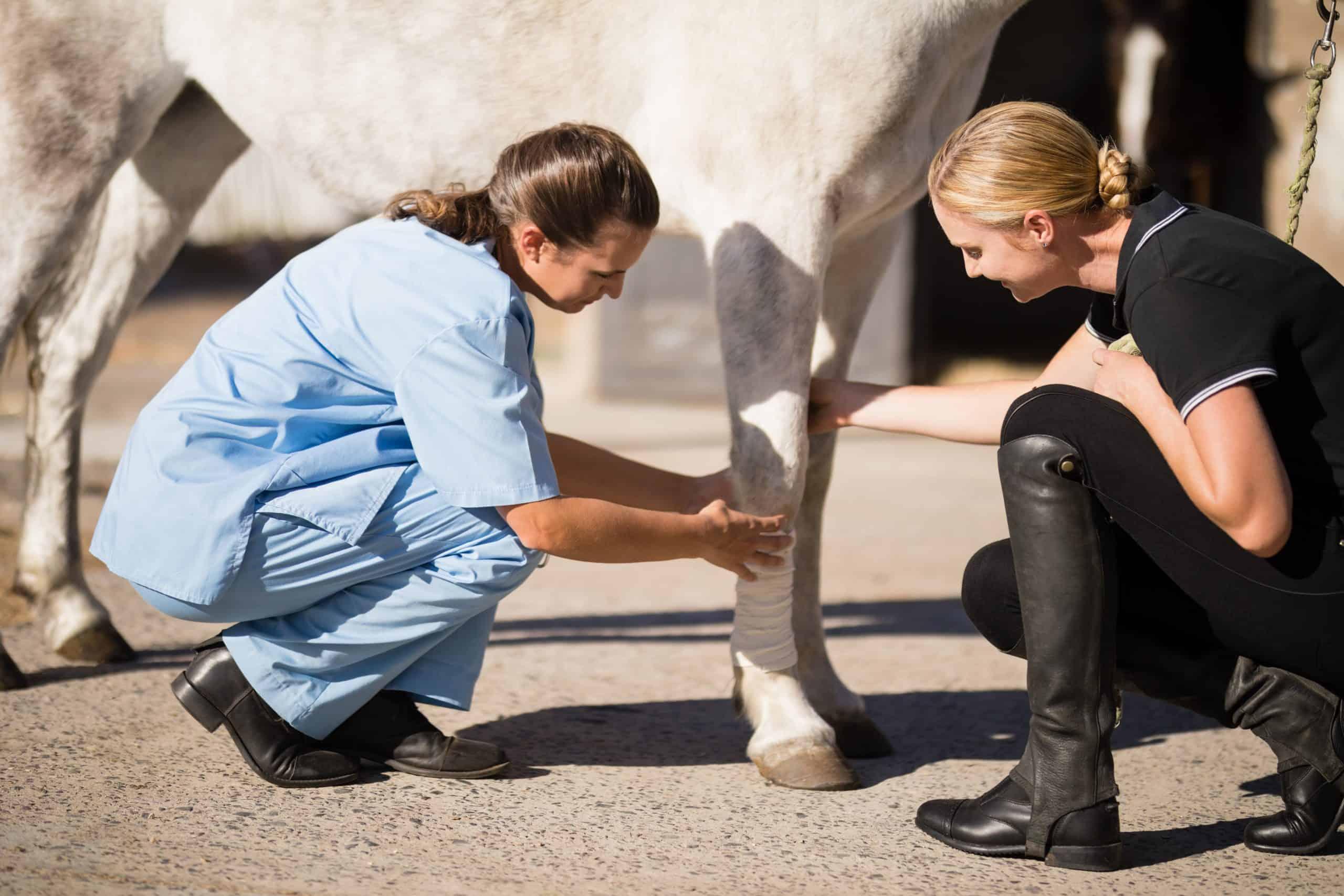horse first aid kit bandage