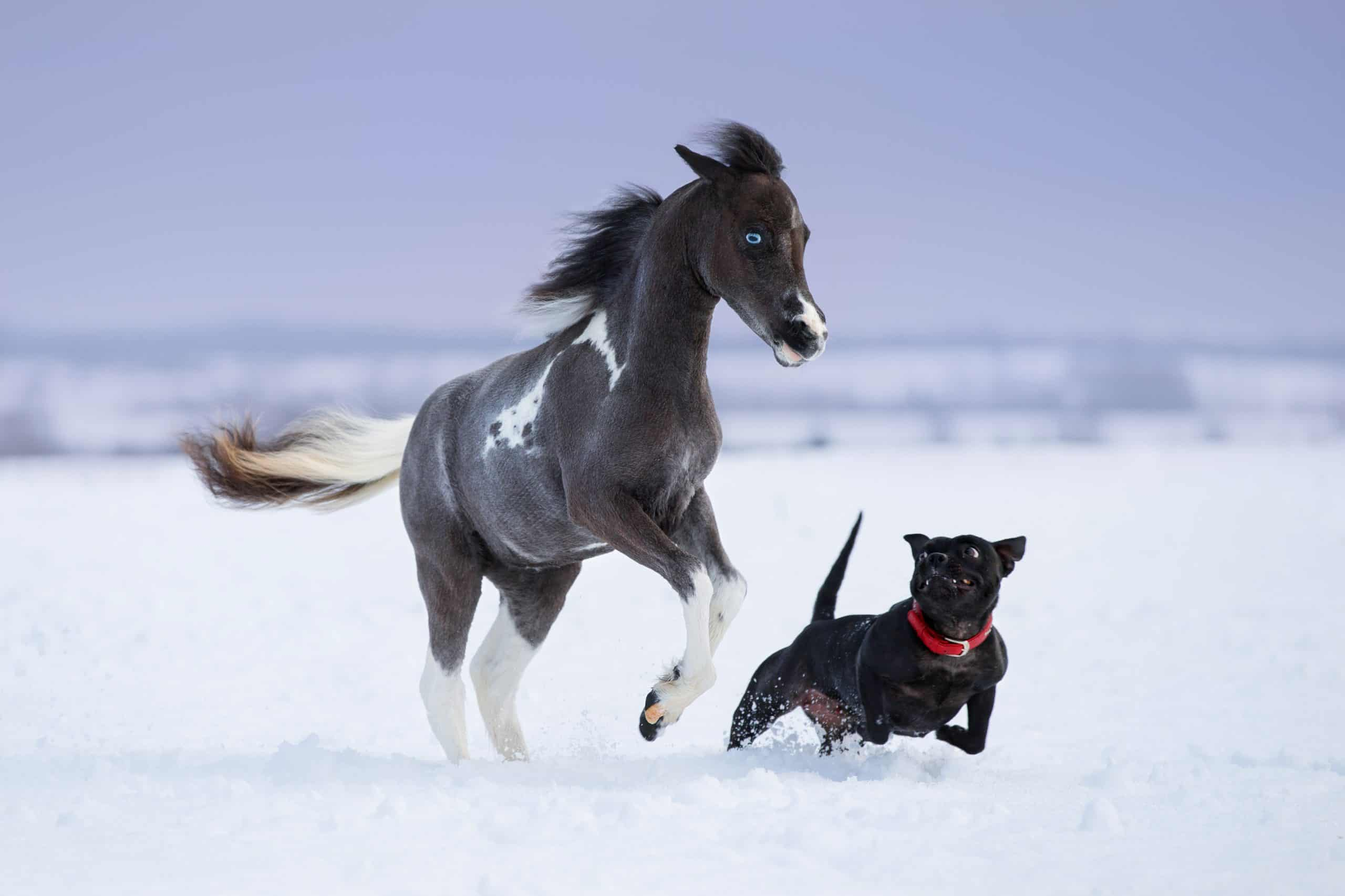 dog and horse running in the snow