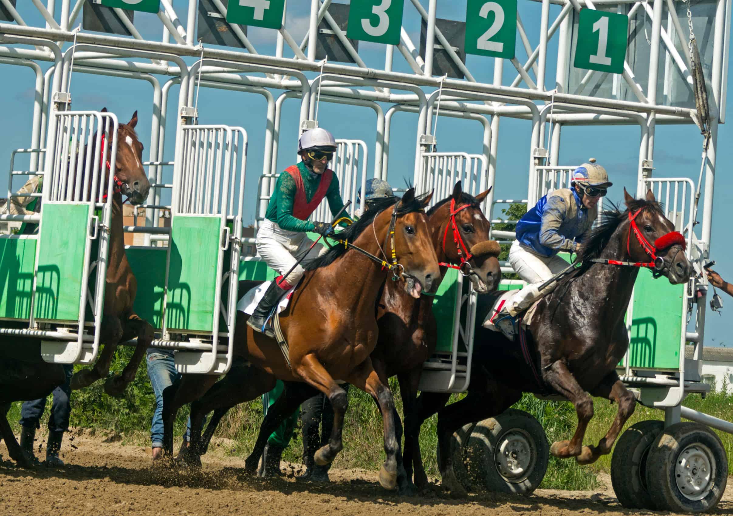 is horse racing cruel