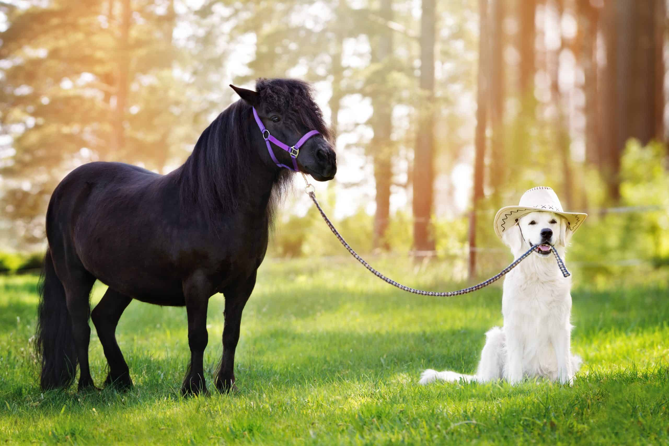 dog and horse posing together