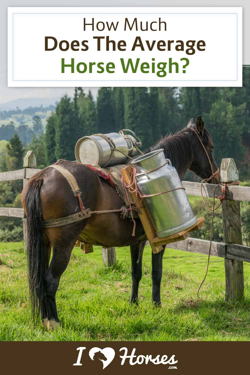 how much do horses weigh