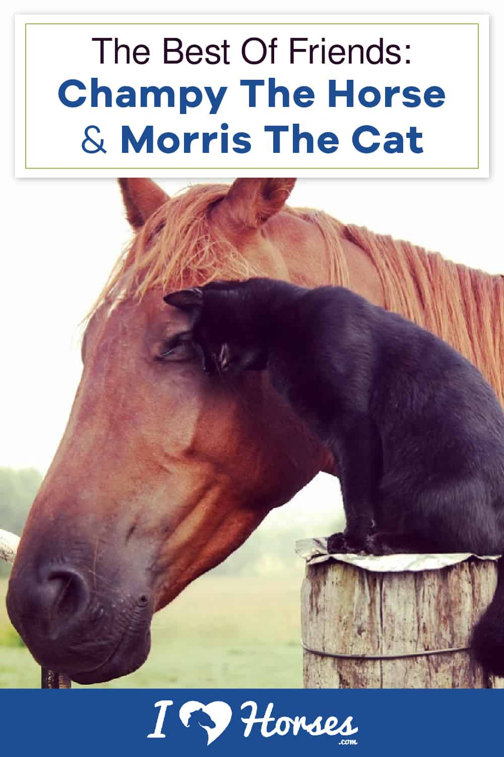 This Horse And Cat Are Best Friends