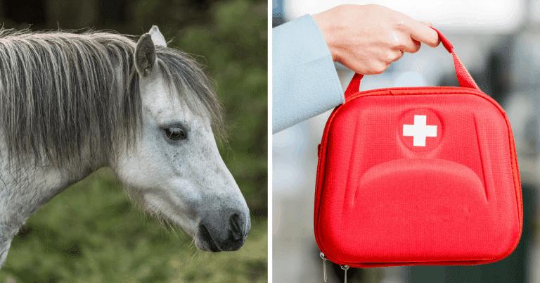 horse first aid kit vet tech