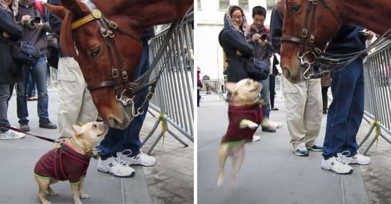 dog meets police horse