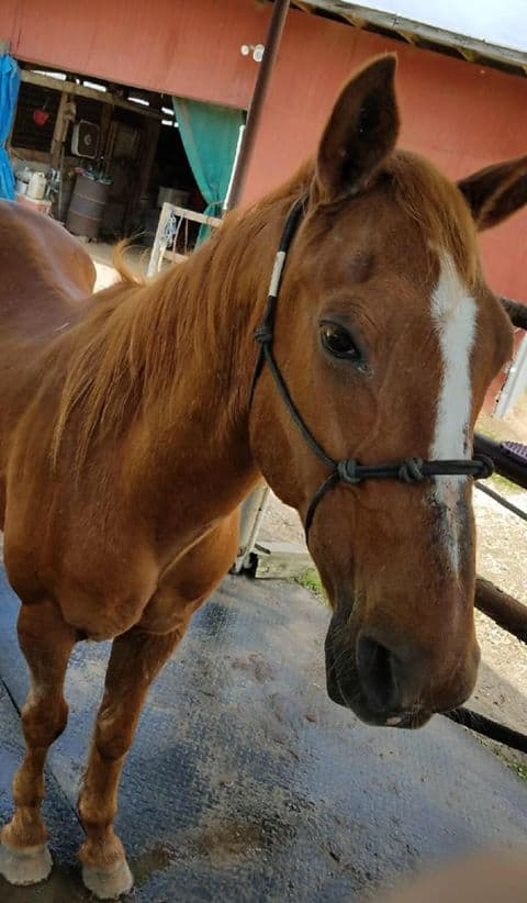 neglected horse is rescued and improving