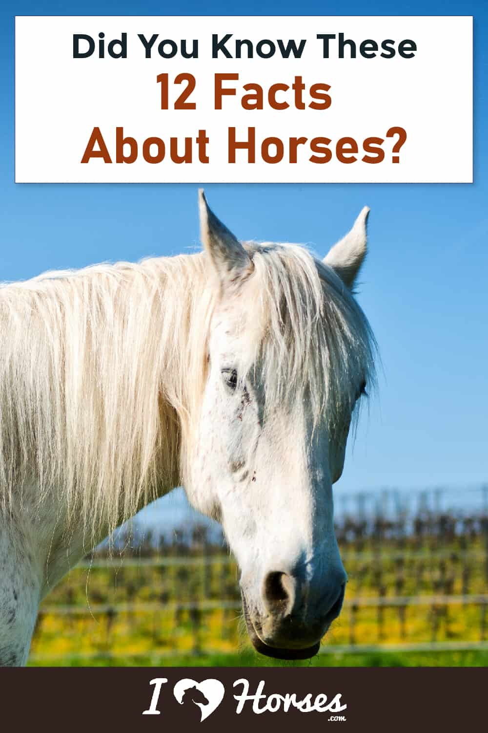 12 Astonishing Facts About Horses-03-01
