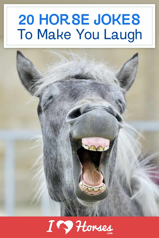 horse jokes to make you laugh