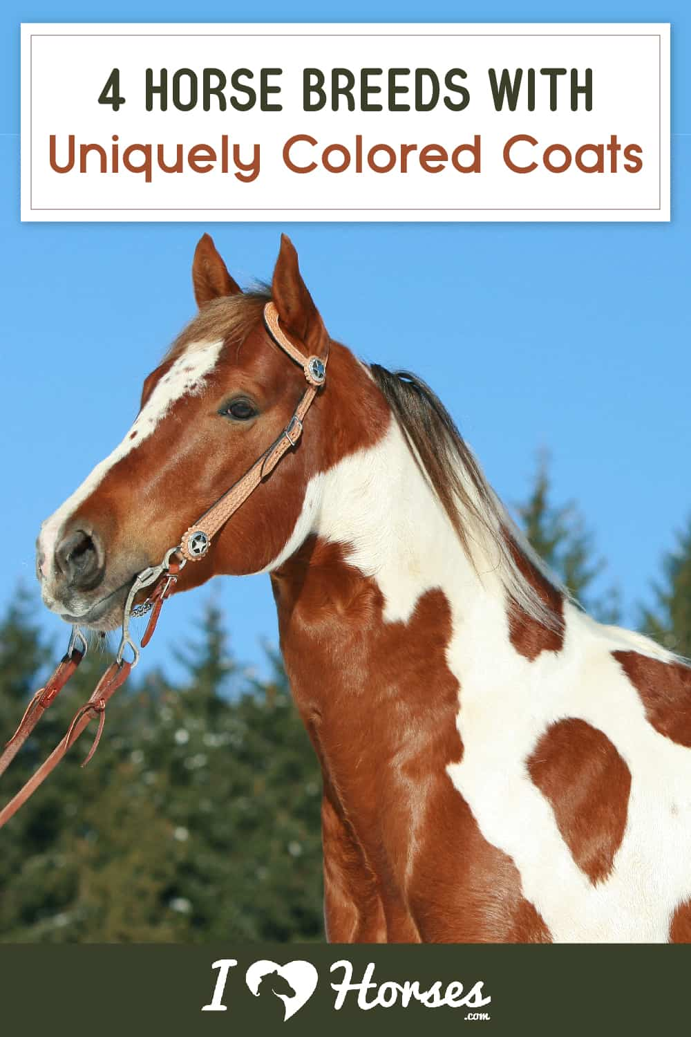 4 Horse Breeds With Uniquely Colored Coats