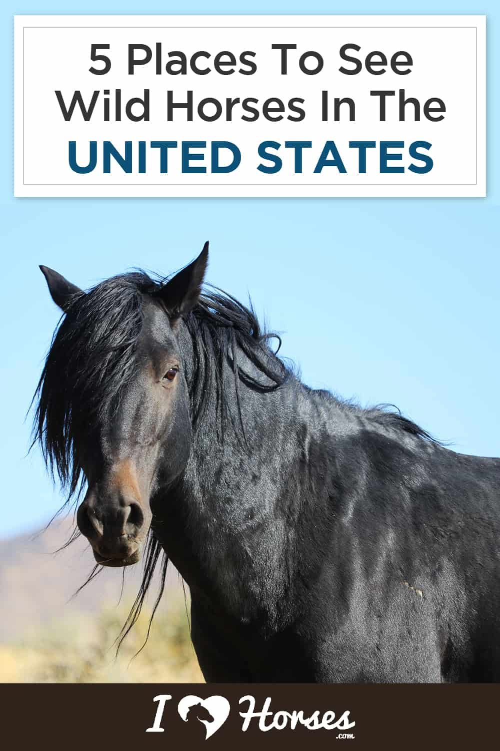 5 Places To See Wild Horses In The United States