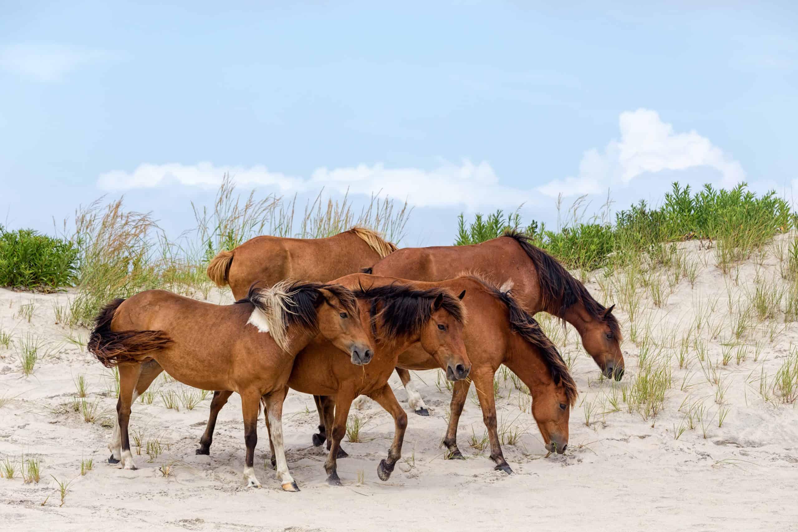 where do wild wild horses live