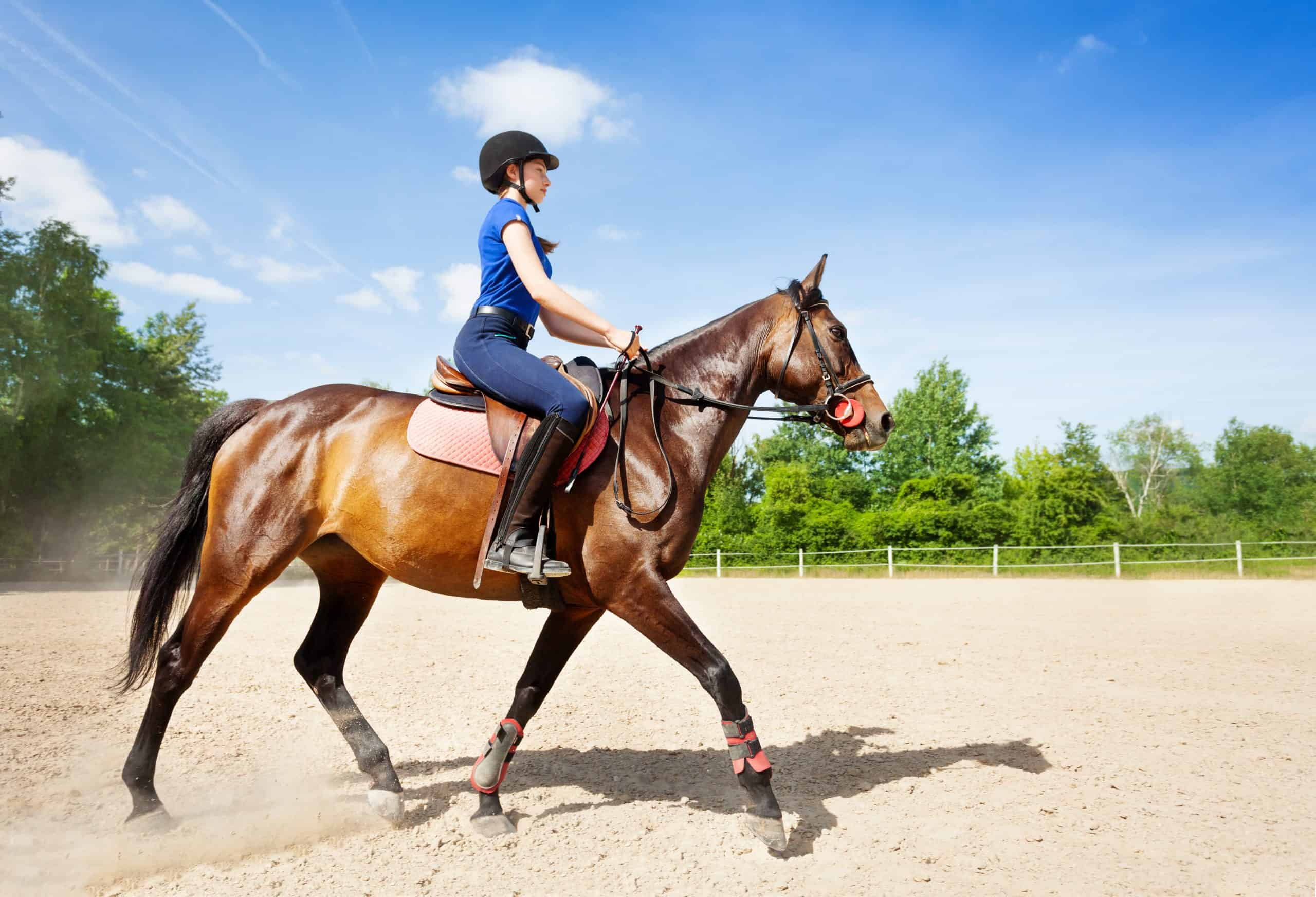 Side view portrait of beautiful bay horse and female equestrian riding at racetrack during competition