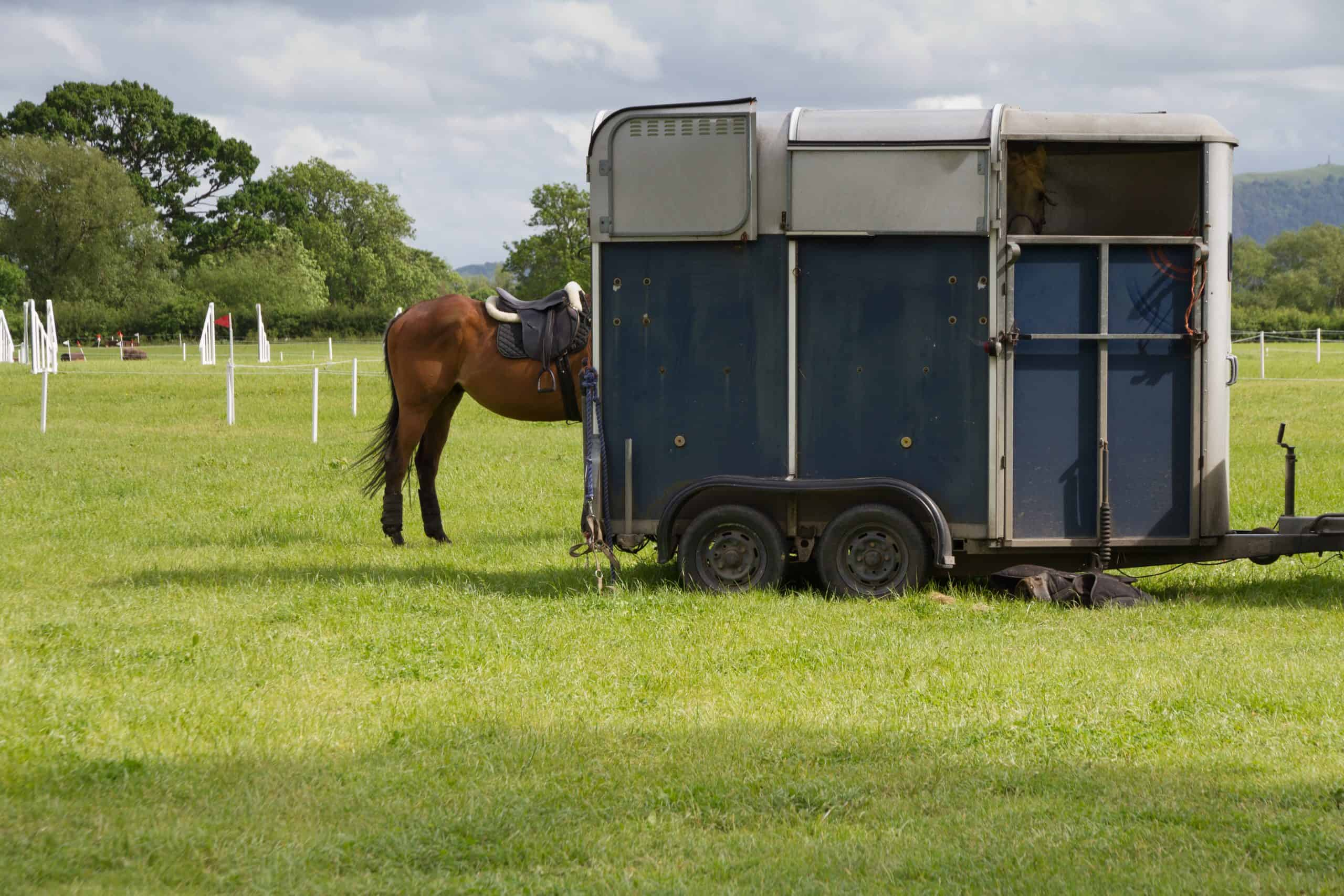 Pony rests by horsebox after competing at event.