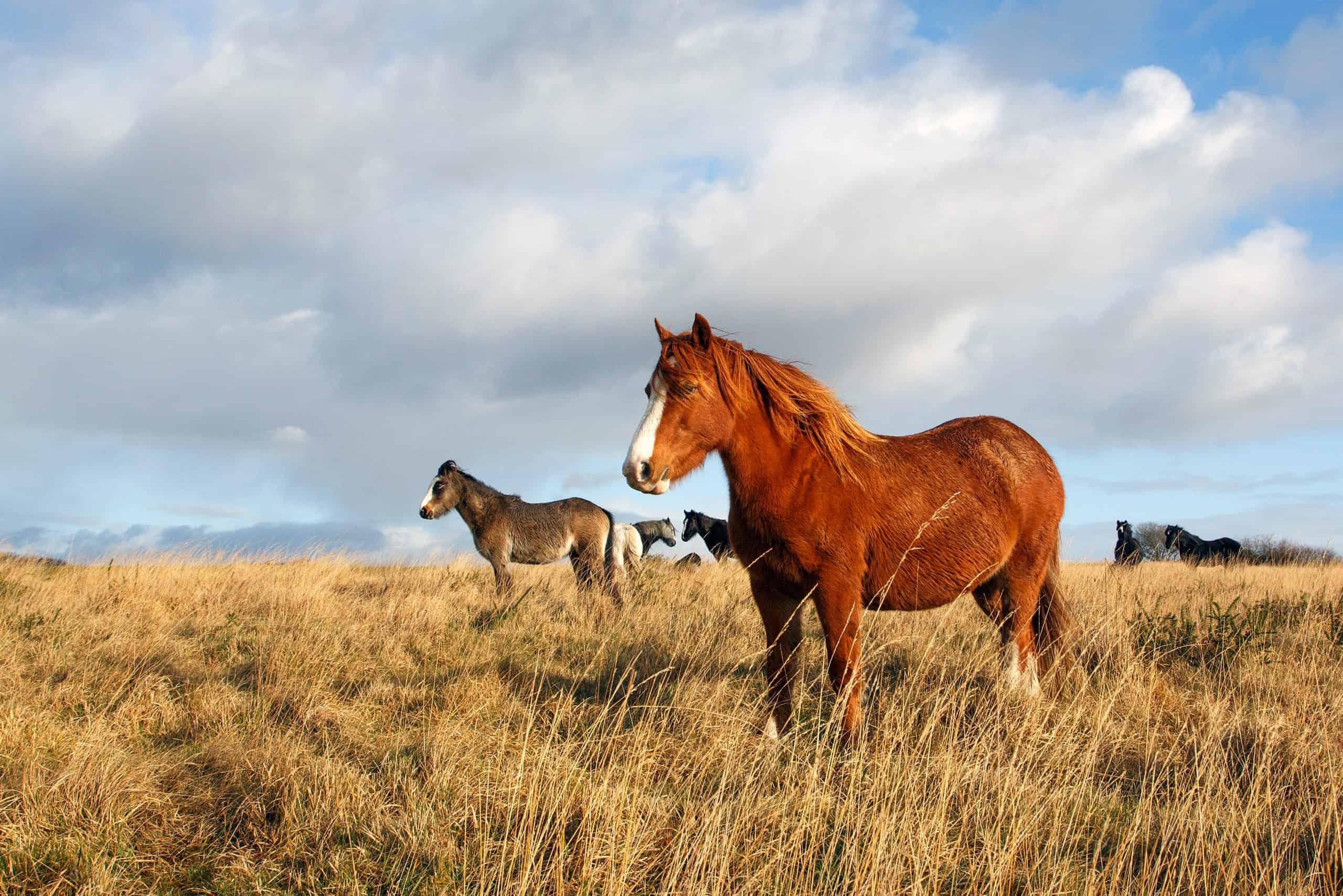 A Horse Standing near the Herd