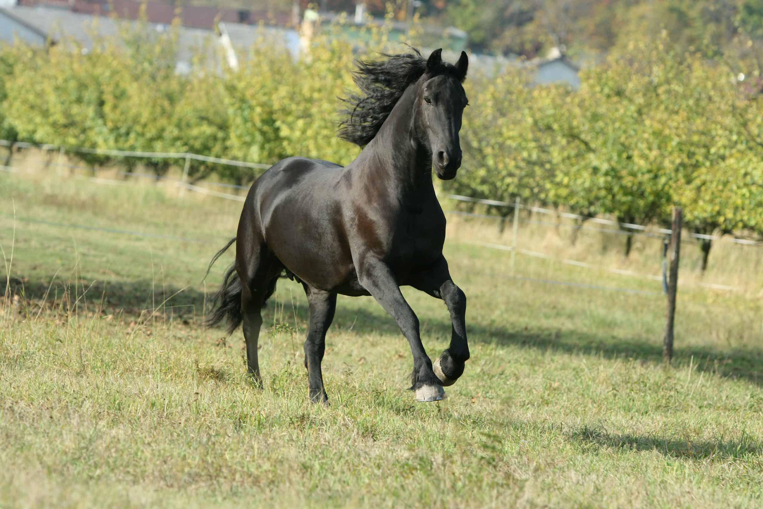 mare running in Autumn