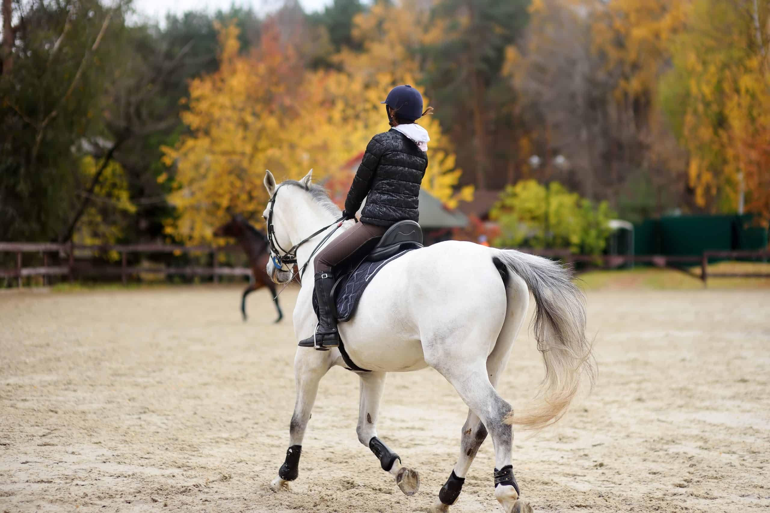 Girl rider trains in horse riding in equestrian club on autumn day. Unusual hobby of urban living.
