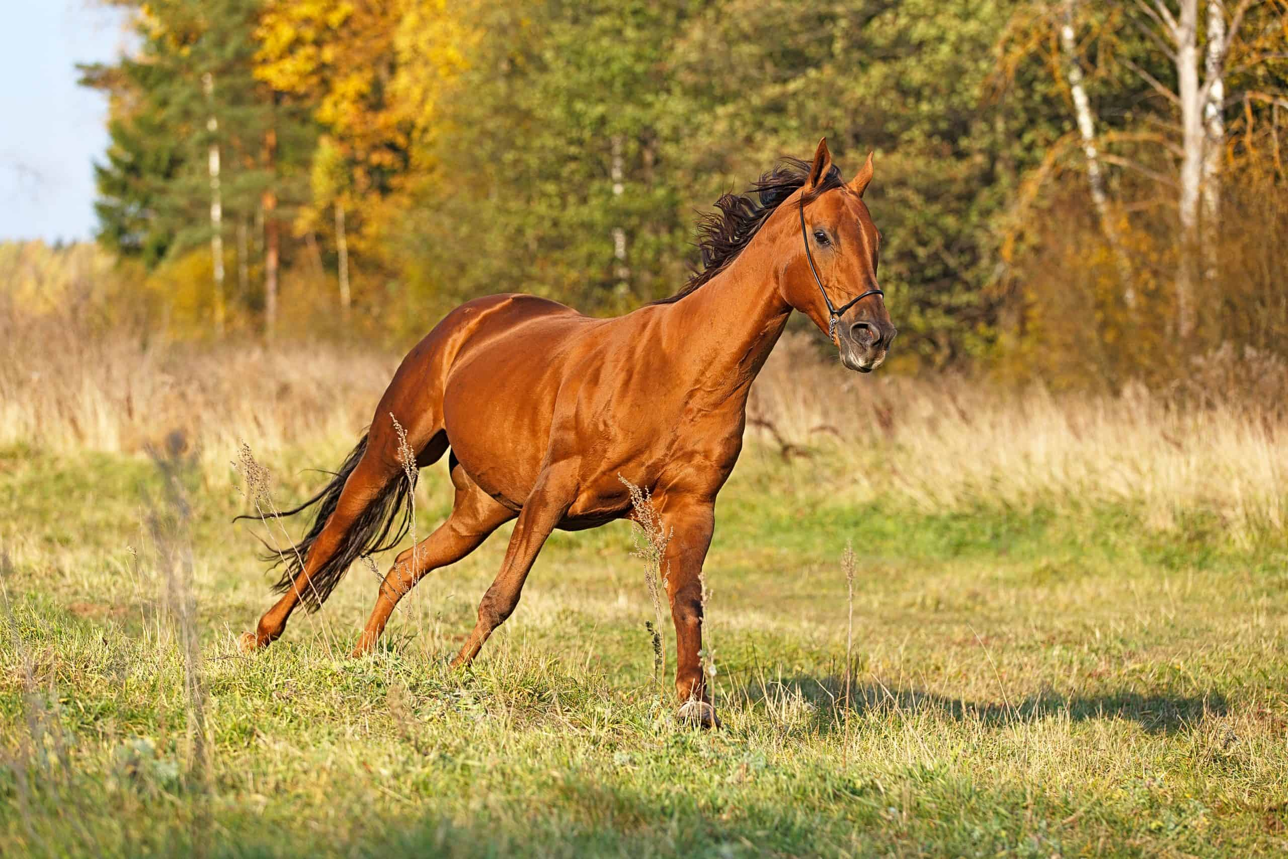 Horse cantering in the field