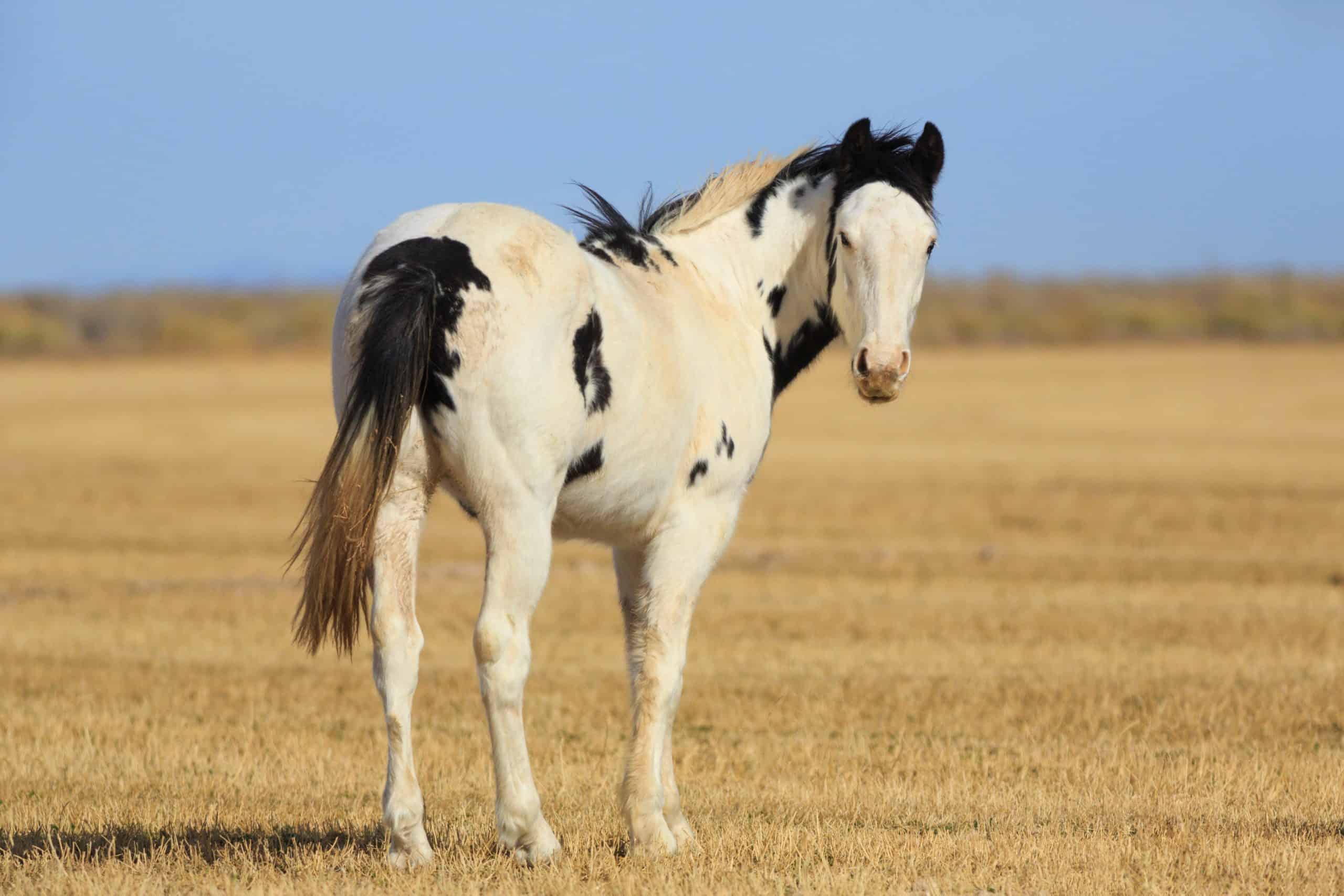 horses for adoption tips